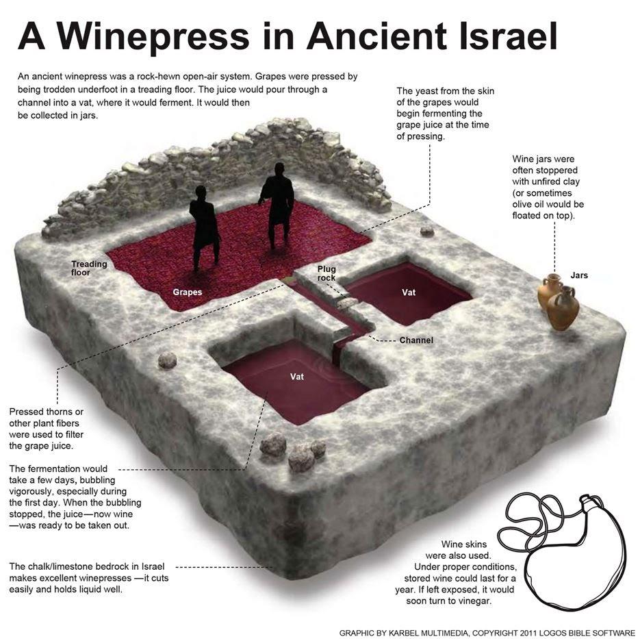 上图:古代以色列酒榨的示意图。酒榨分上下两层酒池,中间有一条通管相连。酒池可能是一块凿空的石头,也可能用砖石砌成。葡萄放在位置稍高的上层酒池中,工人用脚踹葡萄,汁液透过通管流到下层的酒池中。