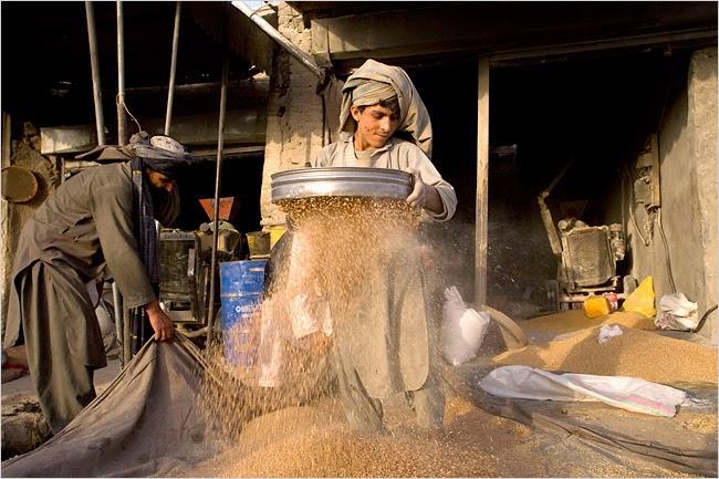 上图:中东人在筛麦子。大块的石子和杂物留在筛子里,谷粒落在地上。