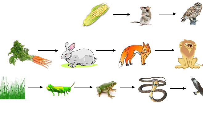 上图:三种形式的食物链,起点都是植物。