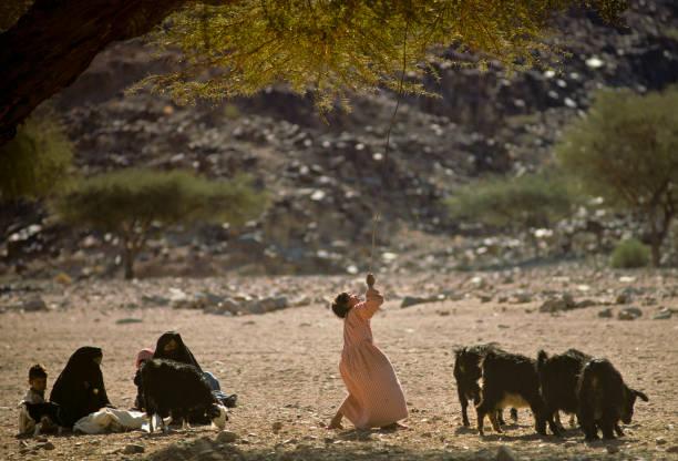 上图:一位贝都因游牧民族的女孩正从柽柳树上收集树叶喂山羊。