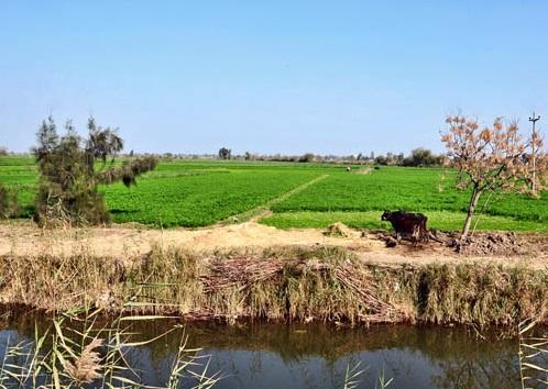 上图:今日尼罗河三角洲的东部仍然是一片平坦肥沃的黑土地。