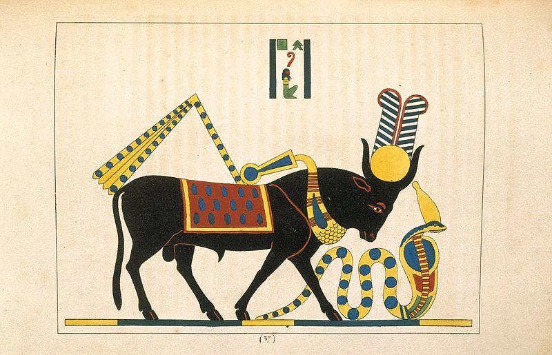 上图:古埃及神话中的公牛神阿匹斯(Apis),象征丰饶及生产力,形象是一只戴有太阳盘及圣蛇的公牛。
