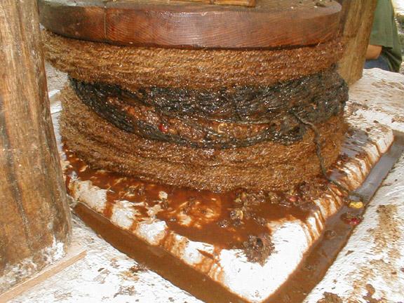 上图:古代以色列人制作普通橄榄油的压榨过程,流出的橄榄油很混浊。金灯台所使用的清橄榄油不能这样制作,必须用手工捣出来。