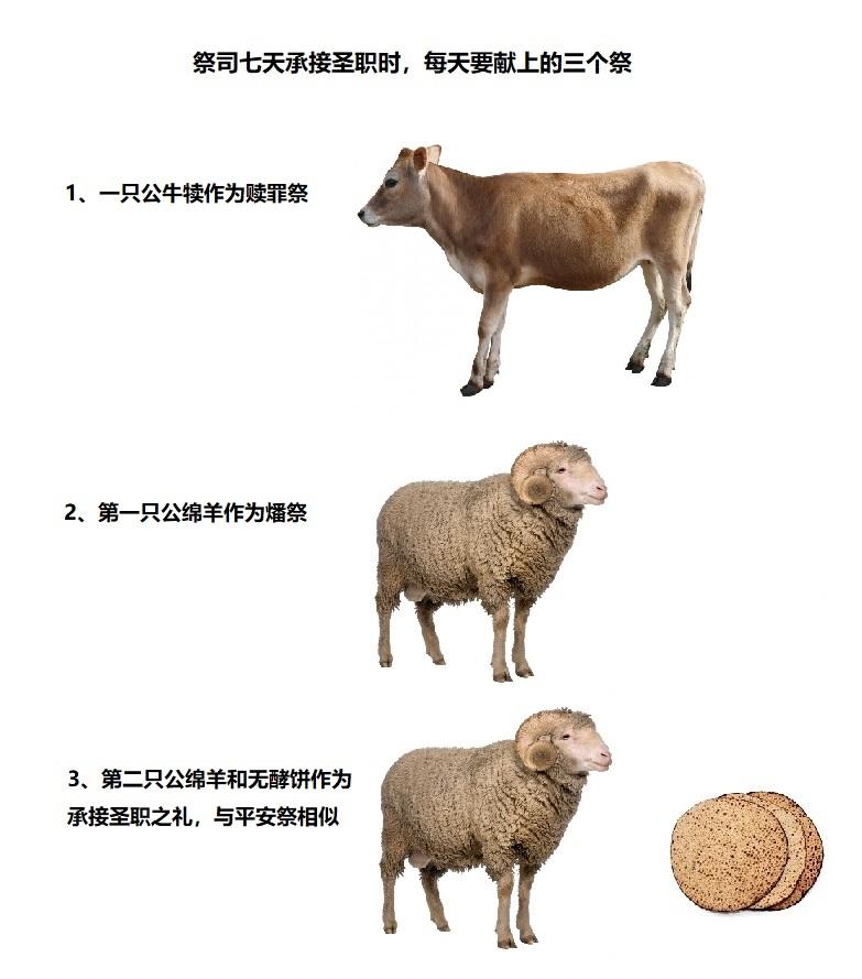 上图:祭司在七天承接圣职之礼时,每天都要带来一只两岁的公牛犊、两只公绵羊和一筐无酵饼,献上三个祭。