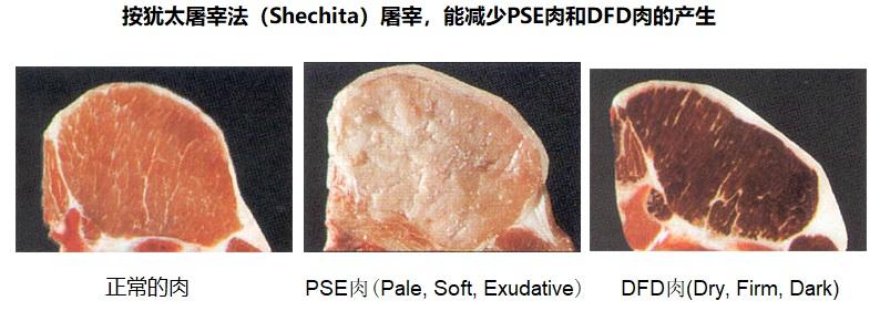 上图:不同的屠宰方法对肉质的三种影响。 如果牲畜在屠宰时受惊吓,会产生应激反应,分泌大量肾上腺素等激素,使肌糖原酵解产生大量乳酸,pH值迅速降低到5.4-5.6,肉味变差,成为PSE肉(Pale,Soft,Exudative)。 如果牲畜在屠宰前长期处于紧张状态,应激反应持续时间长,使肌糖原消耗枯竭,宰后产生的乳酸很少,pH值在6.5以上,肉味较差,容易变质,成为DFD肉(Dry,Firm,Dark)。 犹太屠宰法不但可以把血放干净,也不会使牲畜受惊吓,因此肉质容易保持正常。