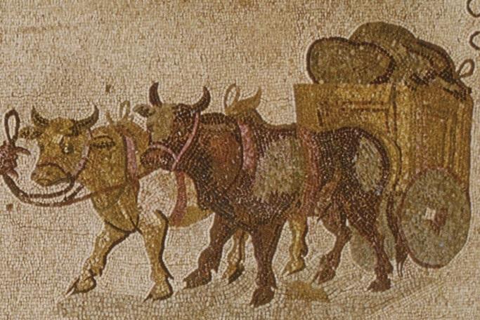 上图:主后3世纪的罗马牛车马赛克画像。罗马的牛车是两轮或四轮,用两头牛来拉,大约每天能走24公里。主后4-5世纪的狄奥多西法典(Theodosian Code)限制载重大约是352公斤,而主后4世纪戴克里先的最高价格法(Edict on Maximum Prices)限重393公斤。旷野里的道路条件更差,因此,搬运会幕的牛车载重能力很可能最多400公斤。众首领有足够的能力献上更多的牛车,但他们只献上六辆牛车,最多只能装载会幕的三分之一,这表明他们并不是想取代神的安排,而是想与神同工,这样的心就蒙了神的悦纳。