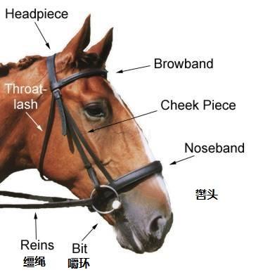 上图:马的嚼环(bit)和辔头(bridle),是为了驾驭骡马而套在其颈上的器具,一般由嚼子、嚼环和缰绳三部分组成。