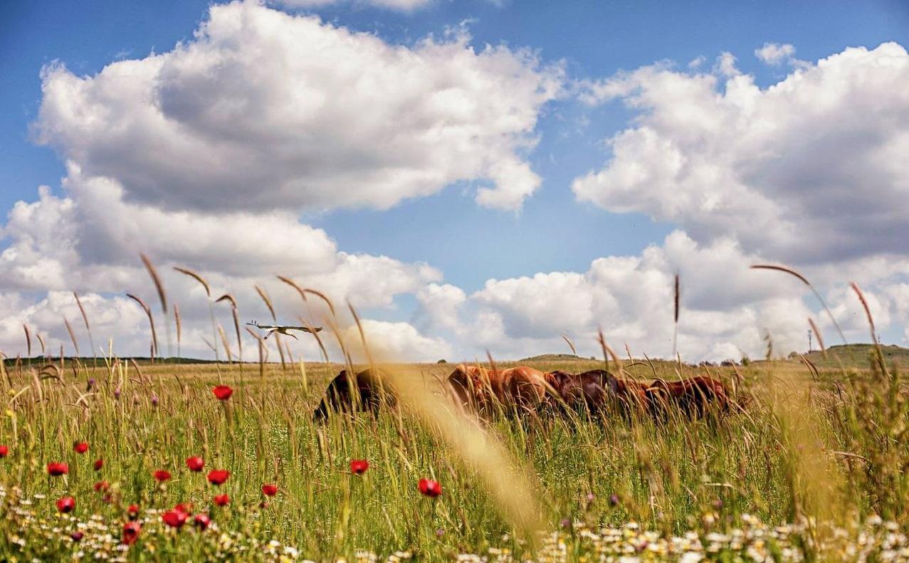 上图:约旦河东的「雅谢地和基列地」(民三十二1)现在被称为戈兰高地,雨水充足,至今仍是优良的天然草场,原来是「亚摩利王西宏和巴珊王噩」(诗一百三十五11)的地。
