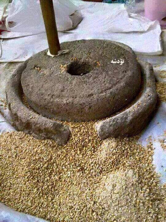 上图:古代以色列家用的磨石包括上下两块石头,通常用玄武岩制造。下磨石很重,谷粒放在上面平或微弯之处,以较轻的上磨石磨成面粉。