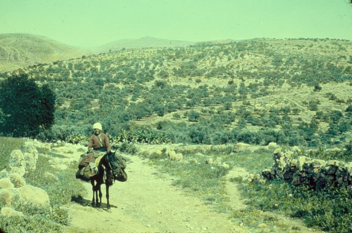 上图:伯·和仑的上坡路(Ascent of Beth-horon),是古代从沿海平原(如港口约帕)到中央山地(如耶路撒冷、伯特利)的必经之路。照片摄于1955-1977年,美国国会图书馆收藏。