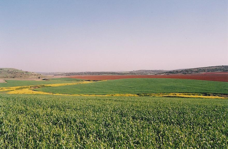 上图:立拿的田野。图的左边是立拿遗址Tel Burna,位于拉吉东北约11公里的Nahal Guvrin河边,水源充足,是从拉吉前往耶路撒冷的必经之地。