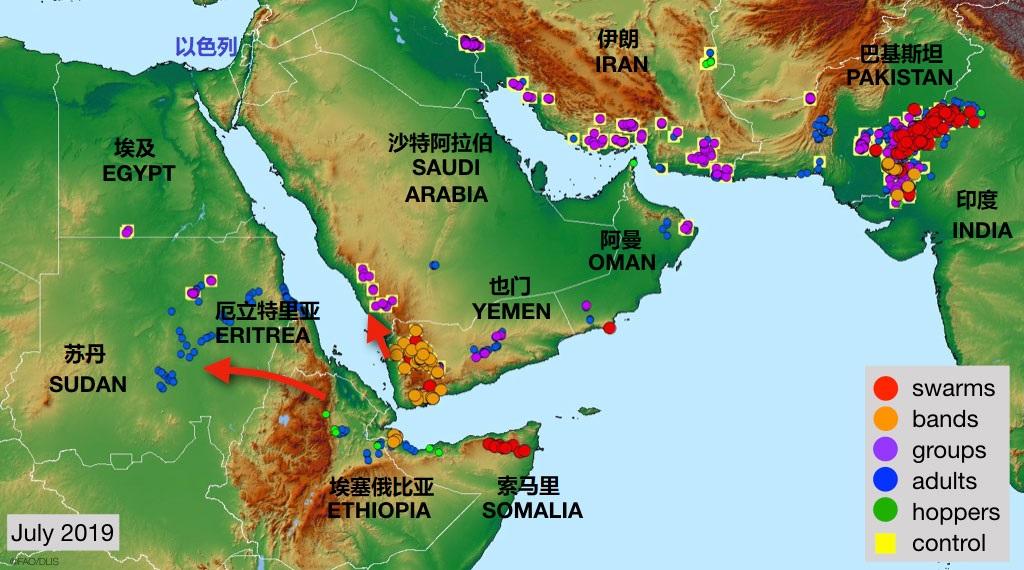 上图:2019年8月2日联合国粮农组织的中东沙漠蝗虫现状报告。沙漠蝗虫是中东常见的灾祸,会对农作物造成彻底的破坏。苏丹、埃塞俄比亚和也门一带繁殖的蝗虫,每隔10-15年就会爆发蝗灾,在二、三月间开始随着风向迁徙,袭击埃及、沙特、约旦和以色列。幸运的是,律法规定蝗虫是洁净的食物。