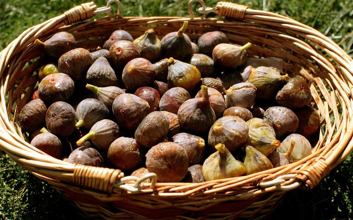 上图:一筐夏天的无花果,已经完全成熟,无法长期保存,必须尽快食用。