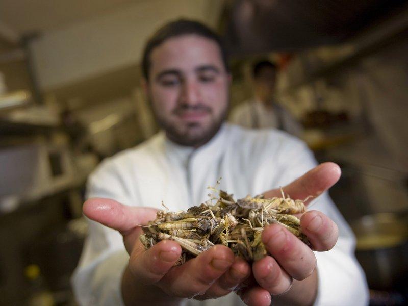 上图:2010年,一名以色列厨师在耶路撒冷的餐馆展示蝗虫,推广蝗虫作为美味的犹太食品。