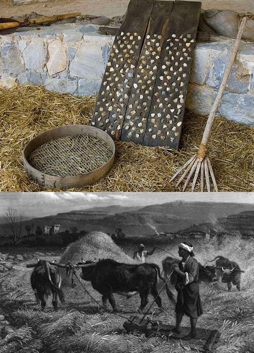 上图:「打粮食的铁器」(摩一3),是打谷用的木制脱粒板。在类似雪橇的木板下面装着金属片或石片,人站在上面,用牲畜拖着辗过谷粒,把谷壳辗碎。