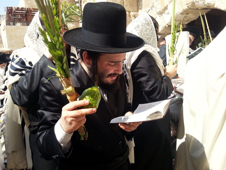 上图:犹太人手持住棚节四祥植物(Sukkot Four Species),在耶路撒冷西墙颂唱「哈利路诗篇」(Hallel Psalms)。