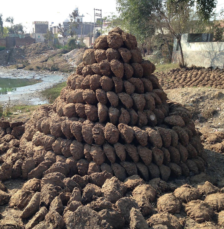 上图:印度的粪饼(dung cakes)堆。干燥的动物粪便可以作为燃料,在许多国家使用,可以缓解对木材资源的压力。