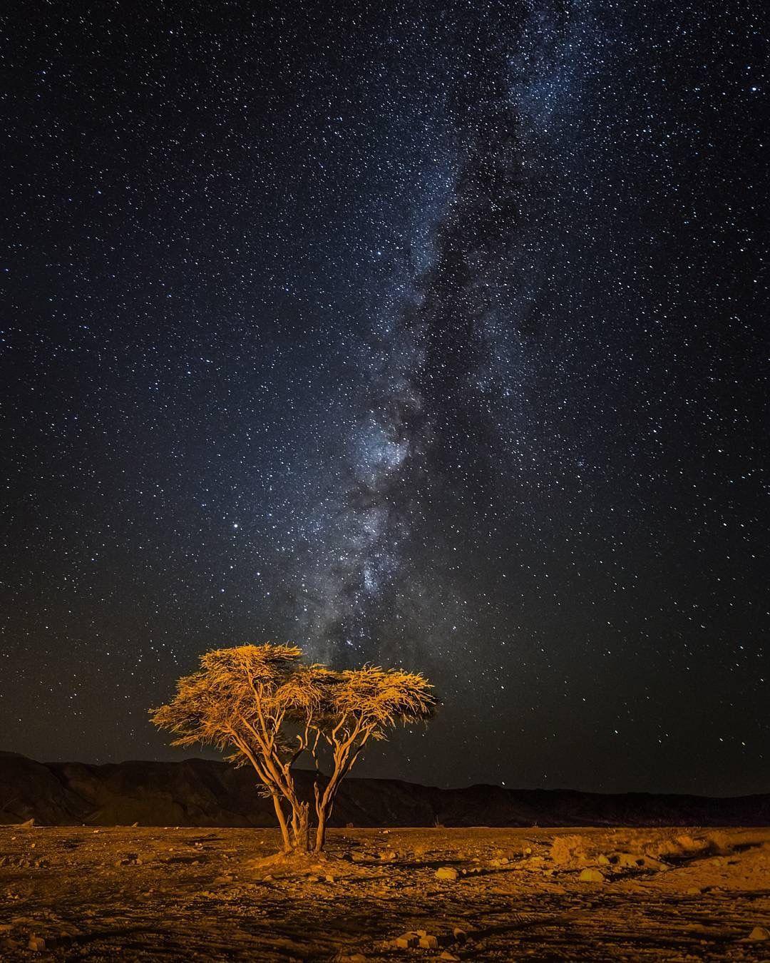 上图:一棵南地旷野中的皂荚树在银河的笼罩之下。人就像这棵皂荚树,「神注目观看人的道路,看明人的脚步。没有黑暗、阴翳能给作孽的藏身。」(伯三十四21-22)