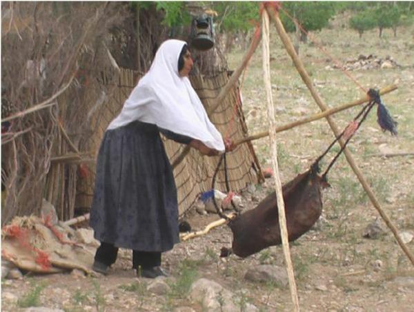 上图:中东游牧部落的妇女在摇牛奶。酪浆被放在羊皮袋(Mashk)里,悬挂在三脚架上,来回摇动一个小时后,可以分离出奶油,然后将奶油捞出。