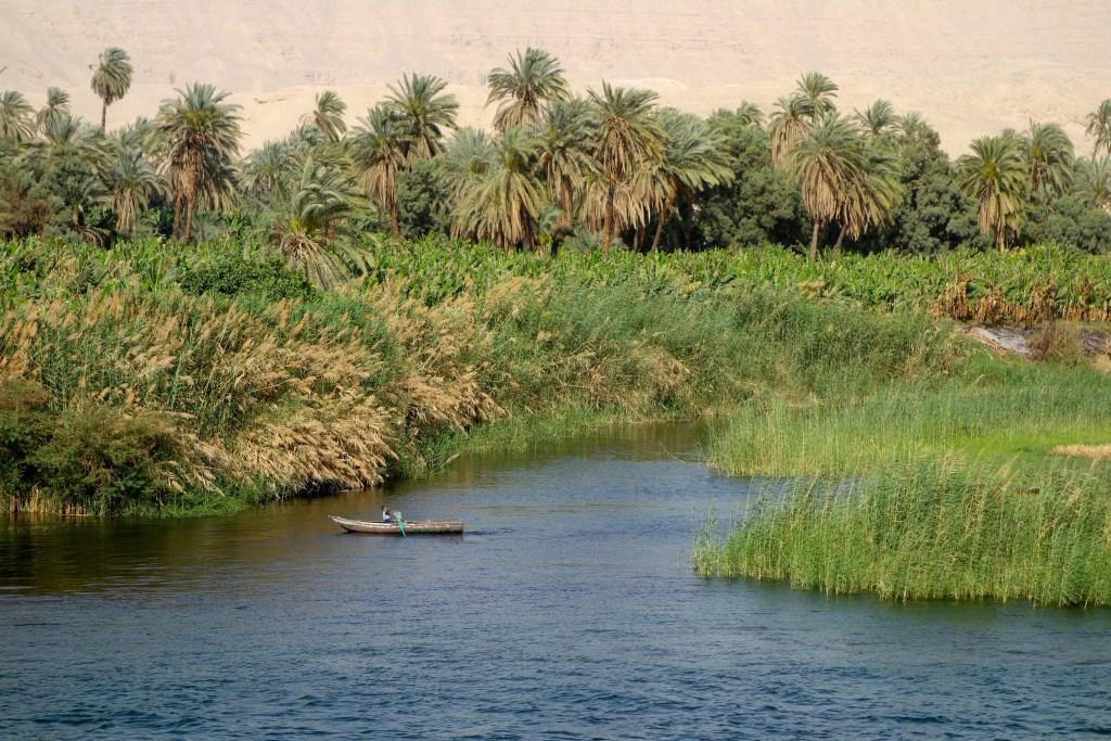 上图:尼罗河两岸生长着大量的芦苇,又被称为纸莎草(Cyperus papyrus)。纸莎草是一种北非原产的多年生草本植物,高而坚韧,约长到4至5米高。在古埃及,纸莎草被用于各种用途,如蒲草纸(Papryus)、芦苇船(Reed boat)、篮子、凉鞋、毯子、药材、熏香。木质根被用来制作碗和器皿,并被用作燃料。但却不能用来做拐杖。